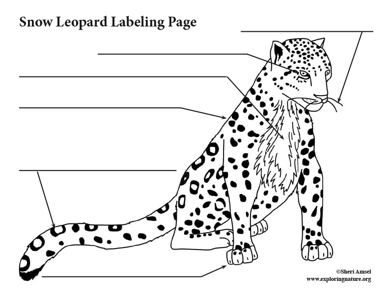 Snow Leopard Labeling Page
