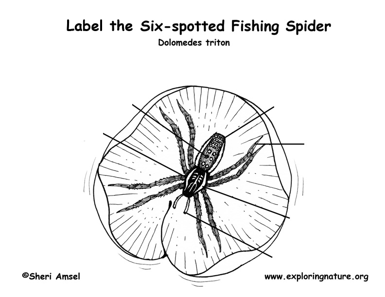 Spider (Fishing) Labeling Page