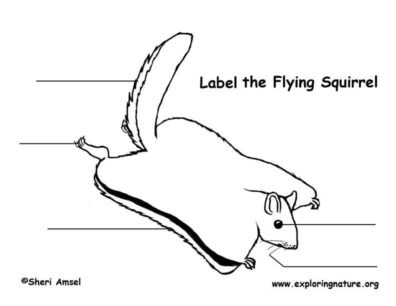 squirrel  flying  labeling page