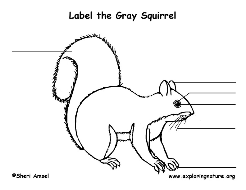 squirrel  gray  labeling page