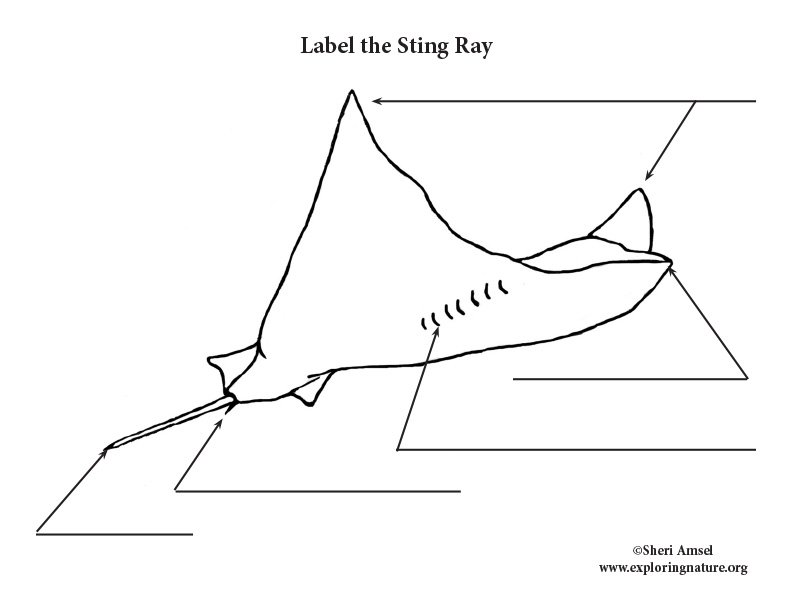 Stingray Labeling Page