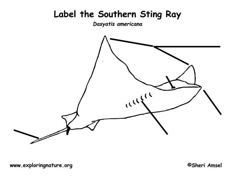 Labeled Diagram Of A Stingray Wiring Library