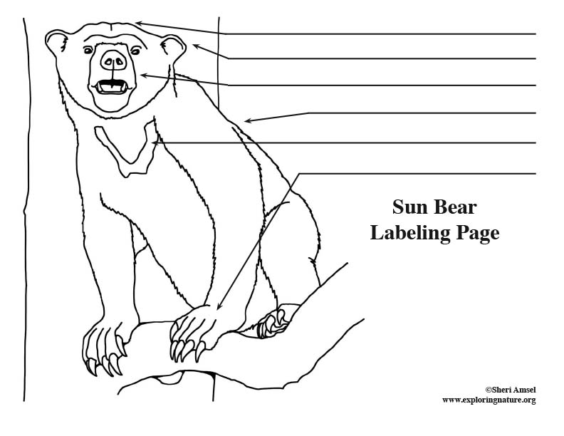 sun Bear Labeling Page