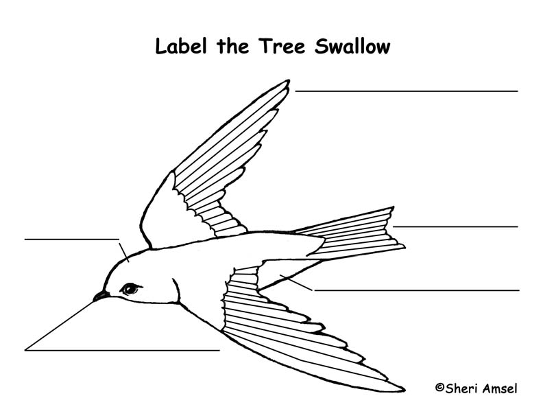 Swallow (Tree) Labeling Page