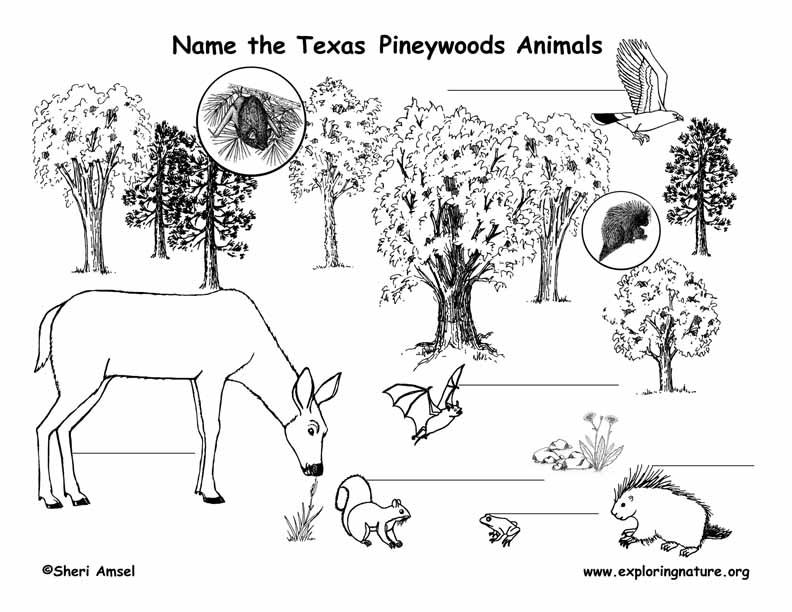 Texas Pineywoods Animal Labeling Page