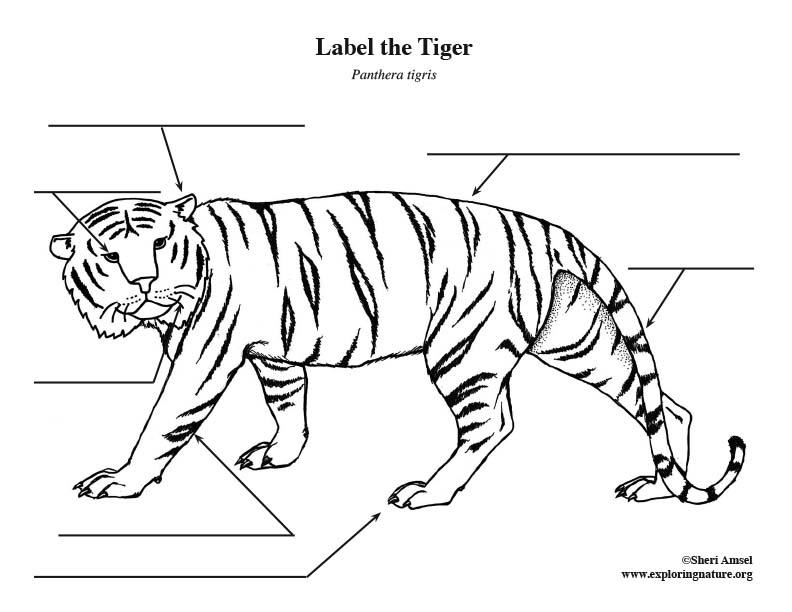 Tiger Labeling