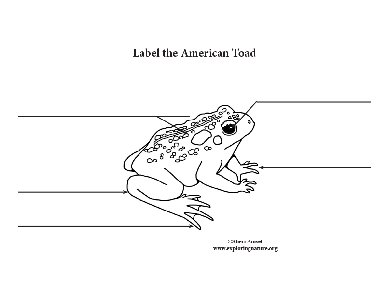 Toad Labeling Page