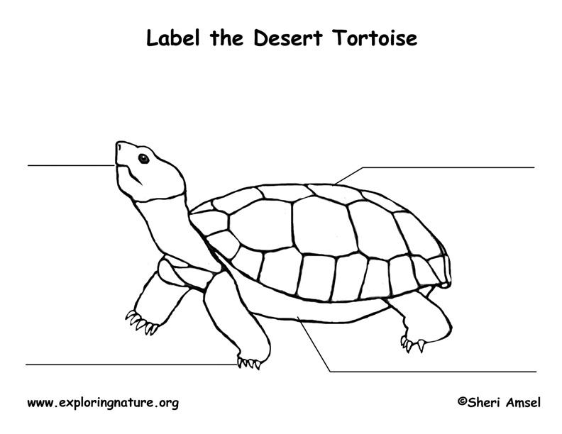 tortoise  desert  labeling page