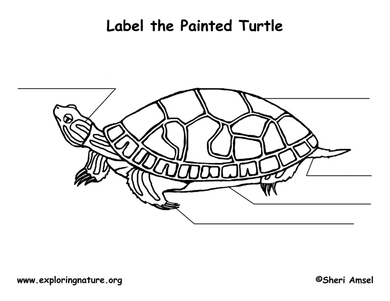 turtle  painted  labeling page