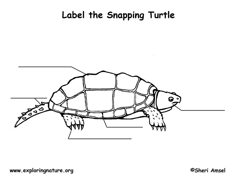 label turtle diagram