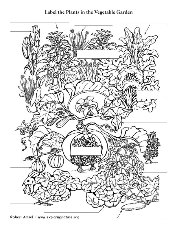 Vegetable Garden Labeling Page