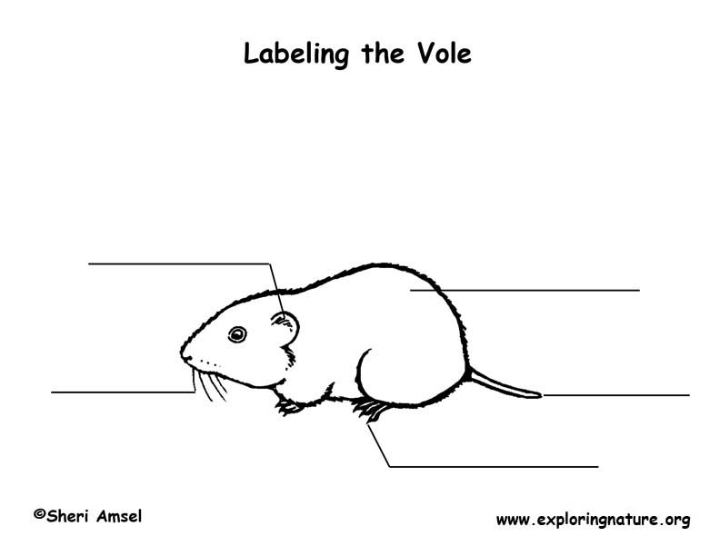 Vole Labeling Page