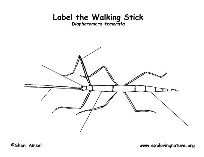 walkingstick labeling page