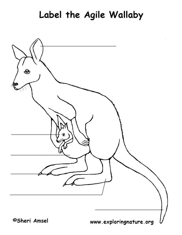 Wallaby Labeling Page