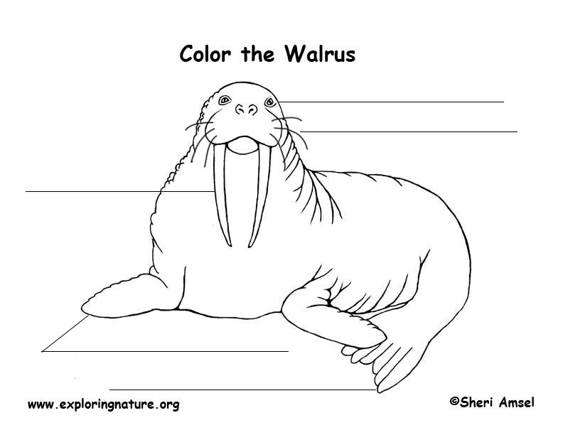walrus labeling page