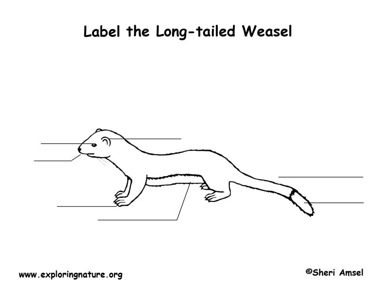 Long-tailed Weasel Labeling Page