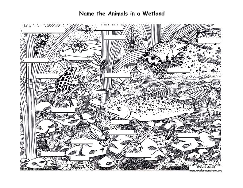 Wetland (Underwater) Labeling Page