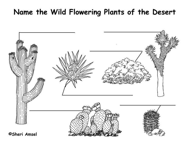 desert wildflowers cactus labeling page
