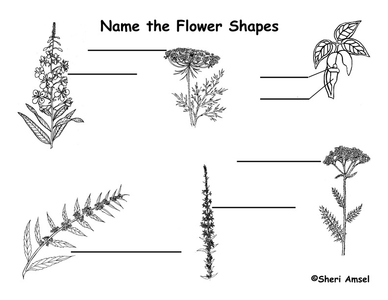 Wildflower Bloom Shape Labeling Page