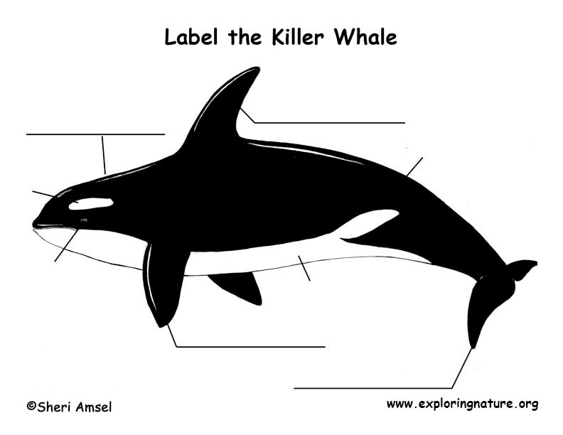 Whale (Killer) Labeling Page