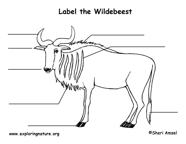 Wildebeest Labeling Page