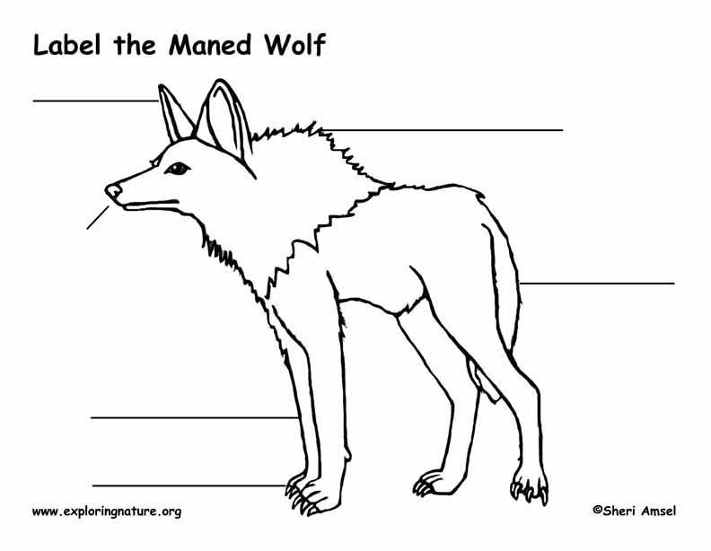 Wolf (Maned) Labeling Page, Maned Wolf Labeling Page