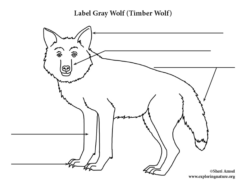 Wolf  Gray  Labeling Page