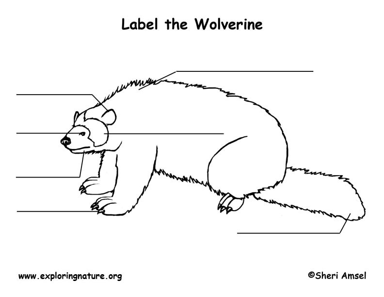 wolverine labeling page
