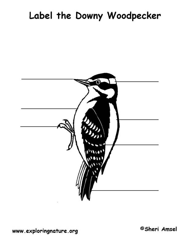 Animal Signs - Woodpeckers and the Life Cycle of Trees
