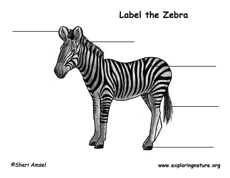 Zebra  Labeling Page