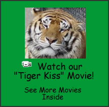 Watch the Tiger Kiss Movie!