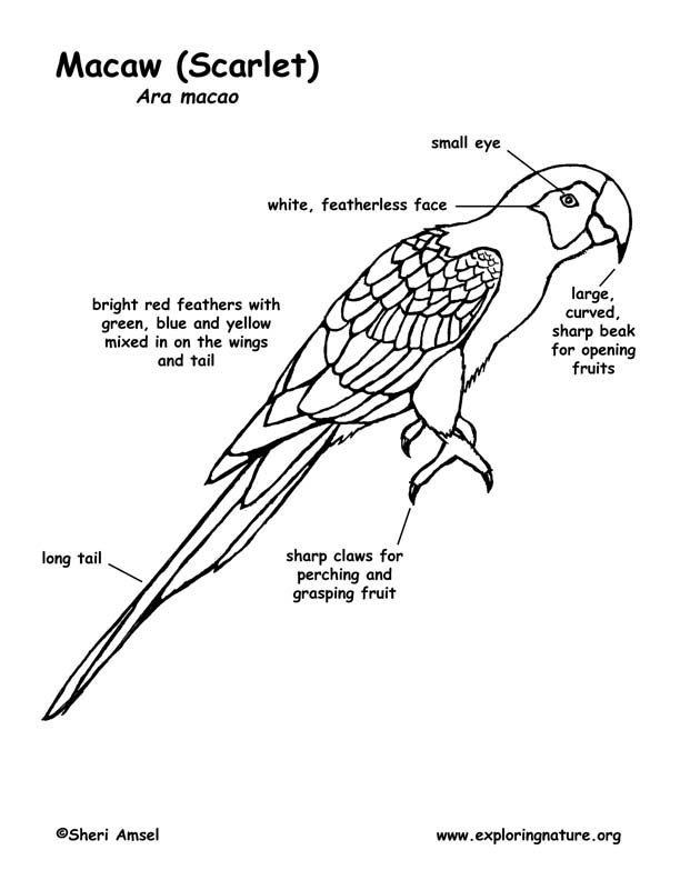 scarlet macaw labeling page