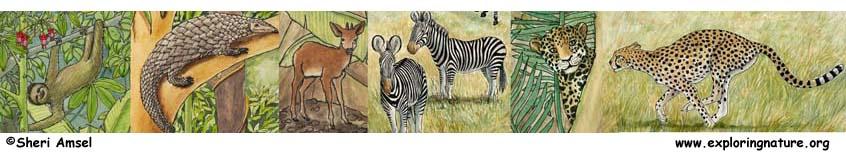 Mammal Activities