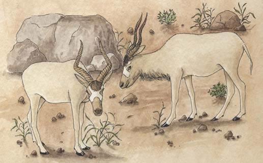 Antelope (Addax)