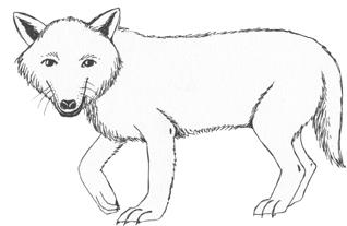 Artic Fox  Bed Sheets