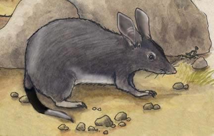 Bandicoot (Rabbit) or Bilby