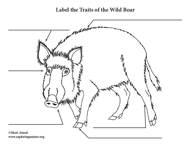 Wild Boar Labeling Page
