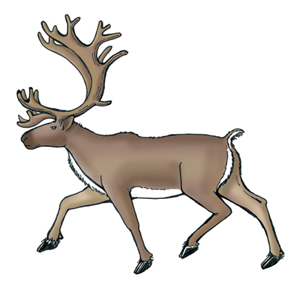 Caribou (Barren-ground and Woodland)