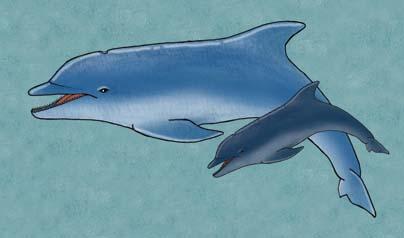Dolphin (Bottlenose)