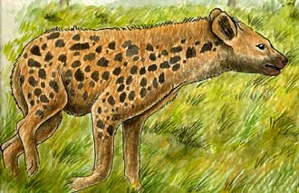 Hyena (Spotted)