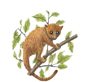 Lemur (Mouse)