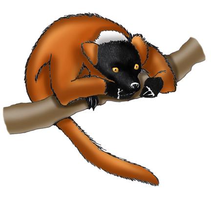 Lemur (Red-ruffed)