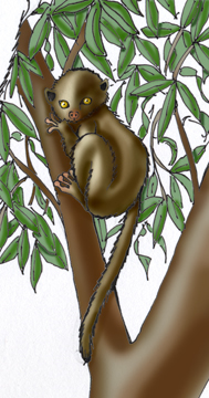 Lemur (Weasel)