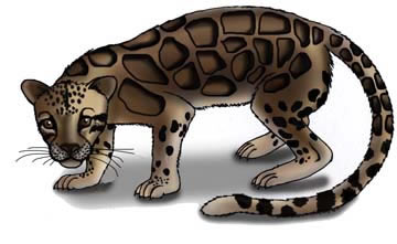Leopard (Clouded)