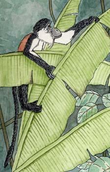 Monkey (Diana)