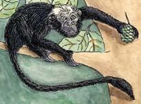 Monkey (Mangabey)