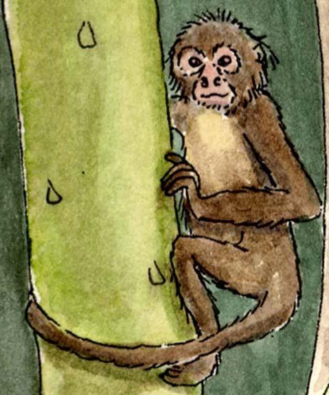 Monkey (Spider)