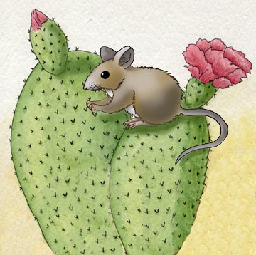 Mouse (Cactus)