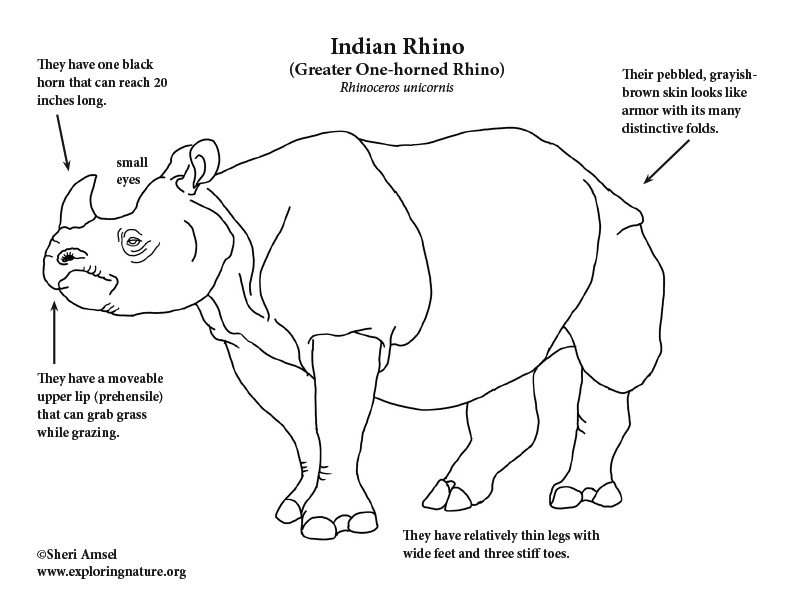 Rhino (Indian) Coloring Page