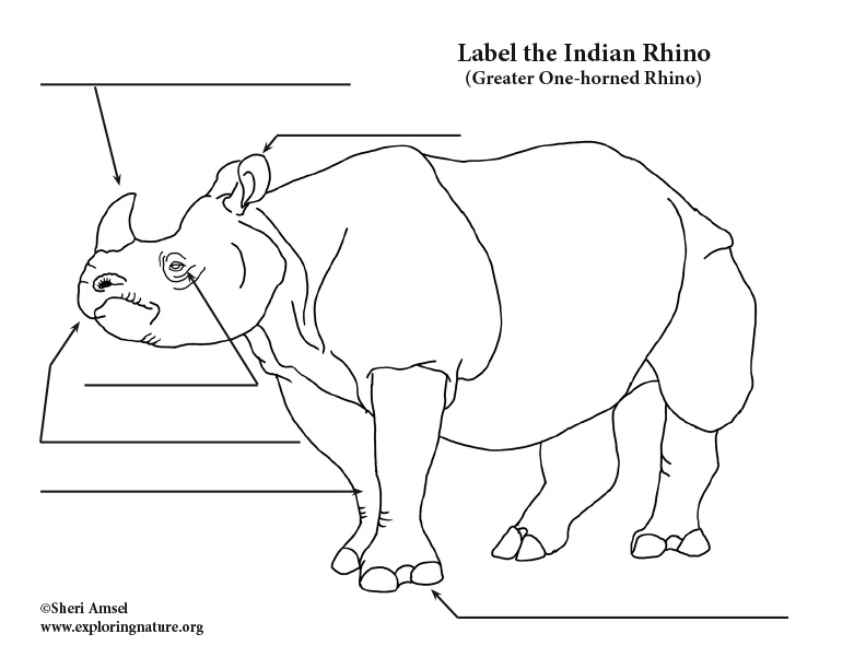 Rhino (Indian) Labeling Page